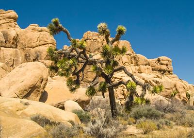 Josh Tree Landscape 09