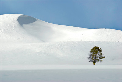 Snowscape 02 Tree-Edit-Edit