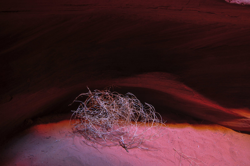 Lone tumbleweed in Antelope Canyon Navajo Tribal Park, Arizona