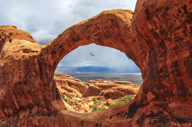 Bird flying through the Top of Double O Arch in Arches National Park, Utah.