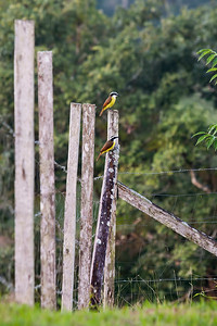 Wildlife in Belize