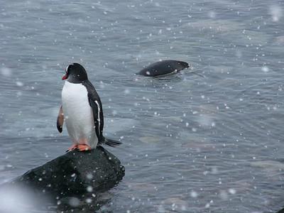 Antarctica 2_Dec 2004
