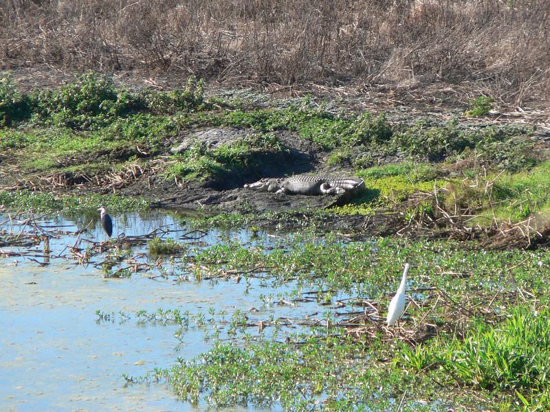 "Start of the Kakadu trip.  Views from an observation tower near Jabiru. The huge ""salty""  (salt water crocodile)  is the main interest here."