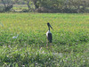 A Jabiru Stork.<br /> A different species from the one I saw in the Brazil Pantanal.