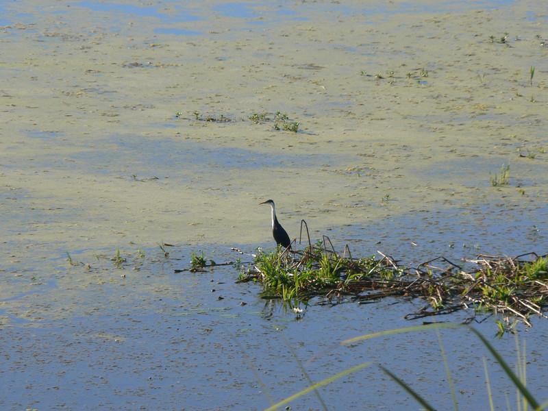 A lovely marsh scene.