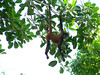 Spider monkeys can be seen on the hike. I had a guide to help finding them.