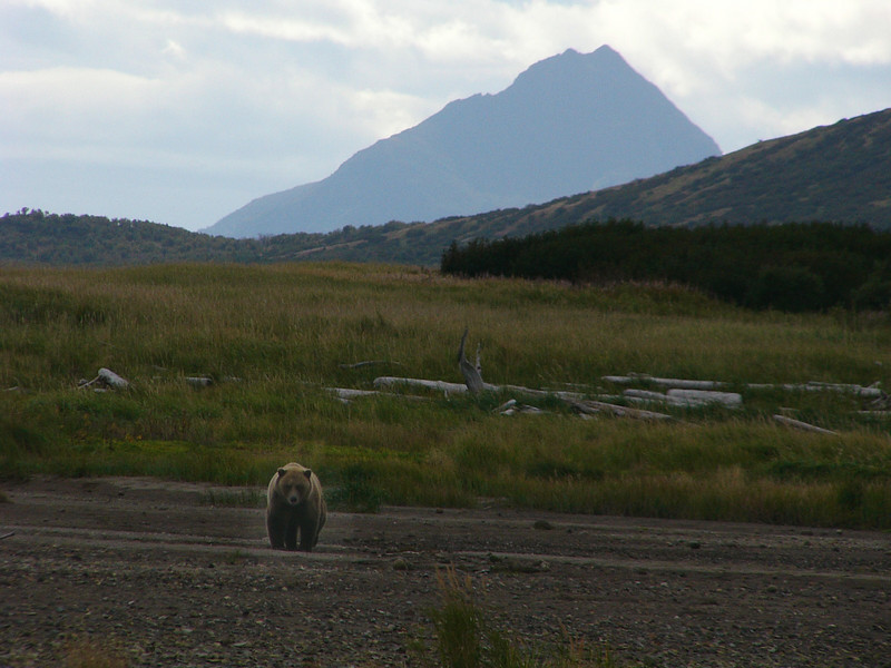 Bear with beautiful scenery.   And oh yes,  there were only 15 humans within 200 miles radius.  Plus about 20 bears.