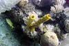 Tube sponge, brain coral and fish.