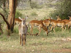 Young Waterbuck and  Impalas