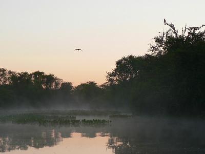 Dawn in the Pantanal
