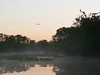 Dawn in the Pantanal