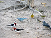 A lot of colorful small birds in the kitchen yard of the fazenda where I was staying.