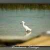 Mosshaven Slideshow5-72