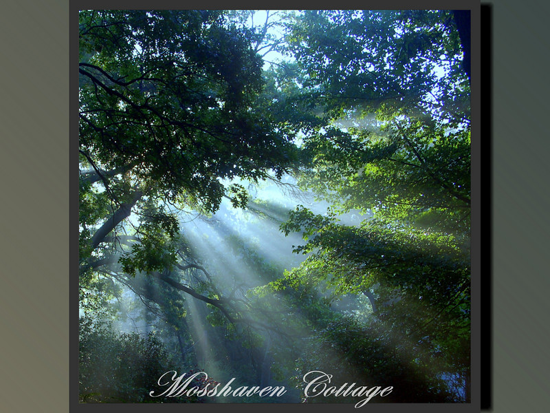 Mosshaven Slideshow5-41