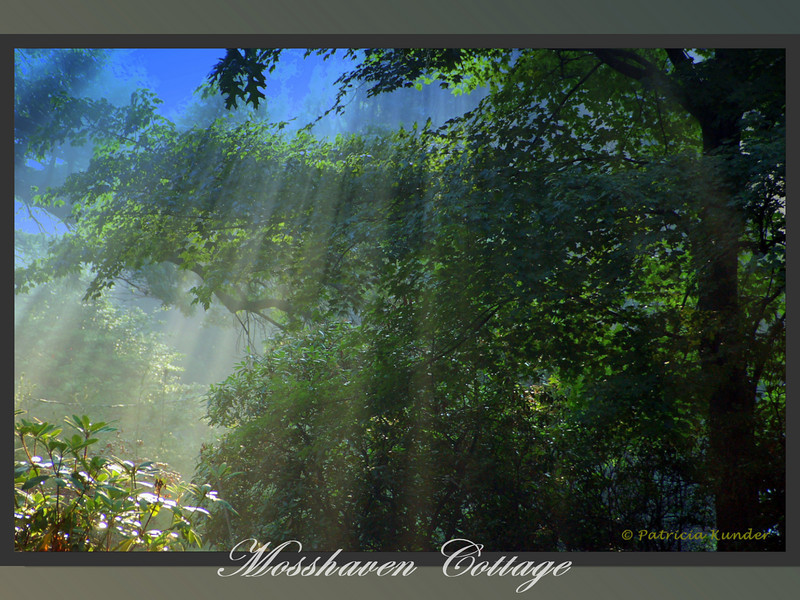 Mosshaven Slideshow5-50