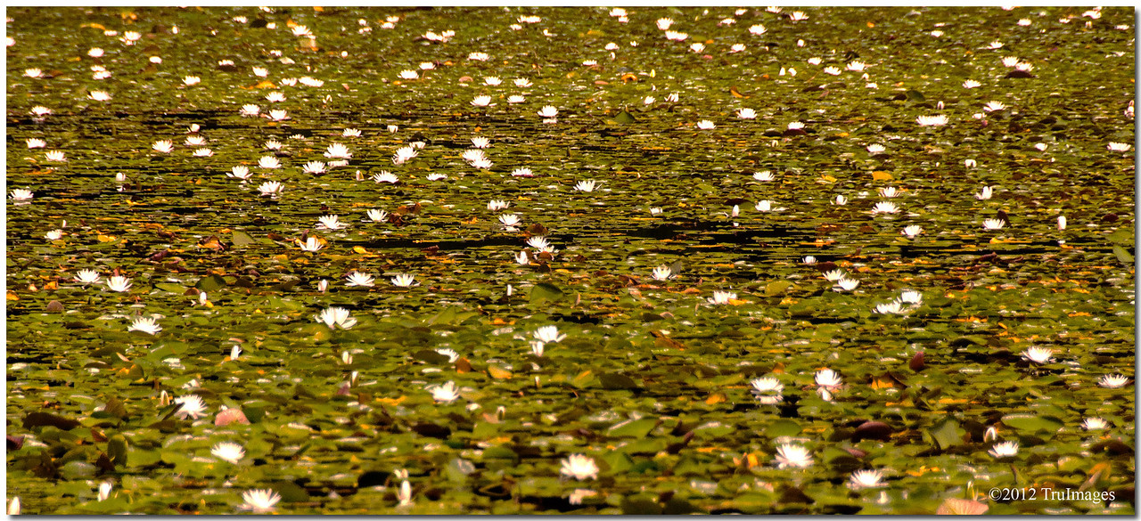 Jul 23<br /> Lilypad fields