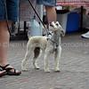 Omaha Farmer's Market - Dog
