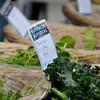Omaha Farmer's Market - Kale