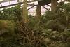 Doorly Zoo jungle.