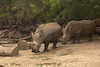 Several rhinos as seen from the Skyfari.