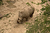 An imposing rhino seen from the Skyfari.