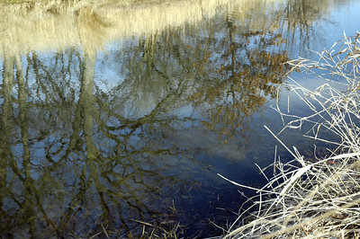 Reflections of Winter Passing