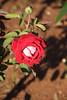 JardinDuMercure_008-IMG_4172