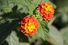 JardinDuMercure_003-IMG_4166