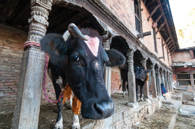 A rather ornately carved cowshed in the backstreets of Bhaktapur. Nepal