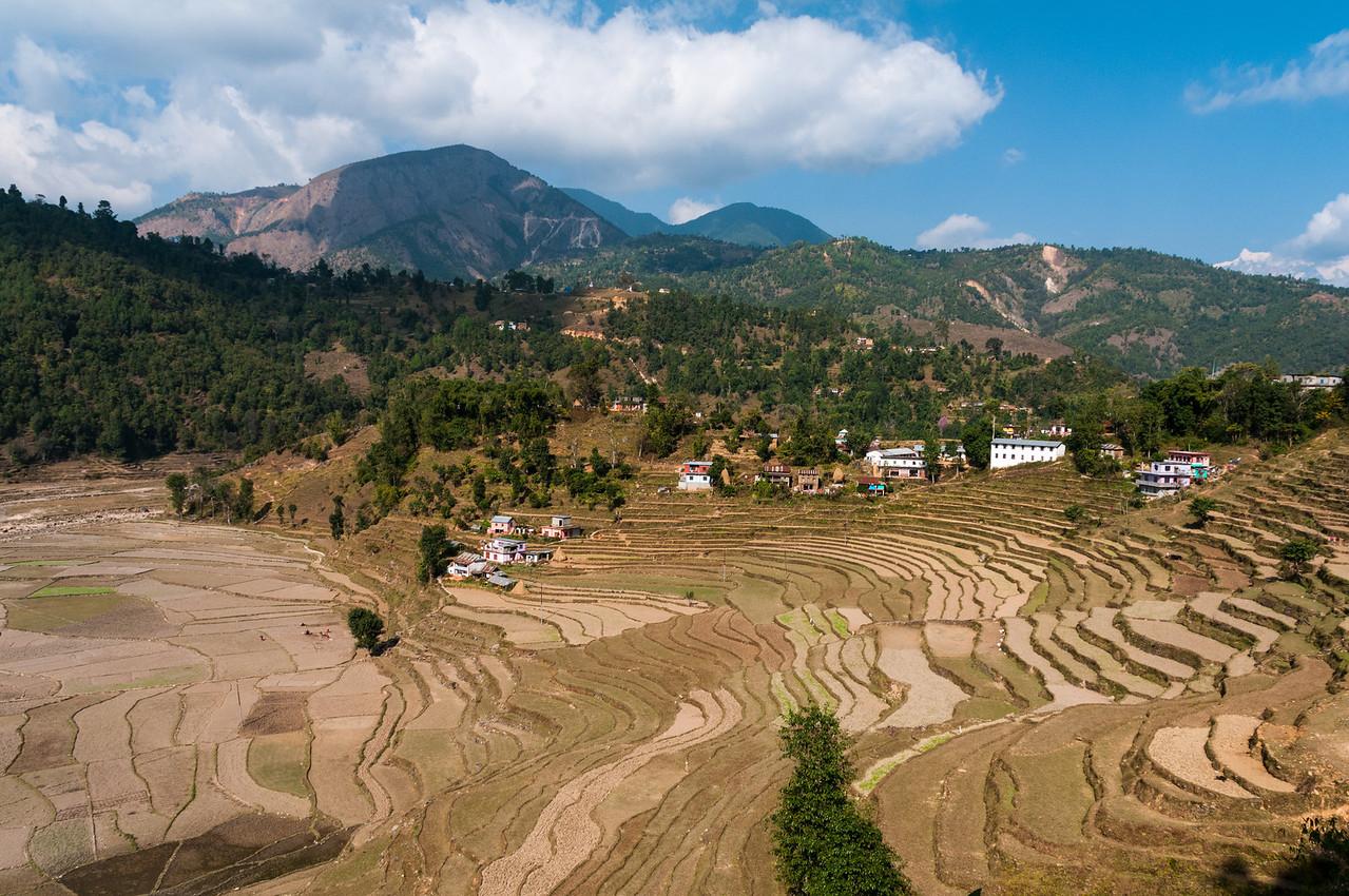 Rice fields SW of Pokhara, Nepal