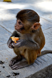 "Baby Monkey at Swayambunath, the ""Monkey Temple"" (c) 2012 Karin Markert, kmarkert88@gmail.com, all rights reserved."