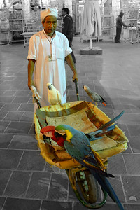 Bird Man, Souq Waqif, Doha, Qatar (c) 2012 Karin Markert, kmarkert88@gmail.com, all rights reserved.