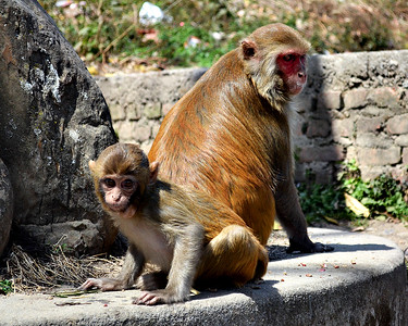 "Monkeys at Swayambunath, the ""Monkey Temple"" (c) 2012 Karin Markert, kmarkert88@gmail.com, all rights reserved."