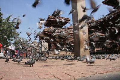 pigeons at Durbar Square, Kathmandu