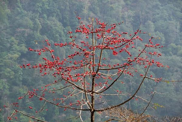 Nepal Februar 2008 - Anapurna Trekking