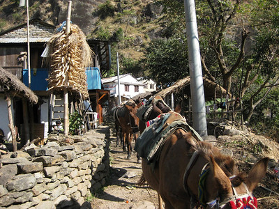 Mule Train: Note the corn hanging out to dry.