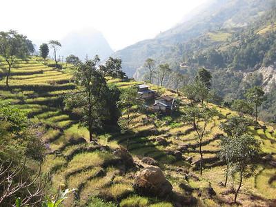 Hillside farming.