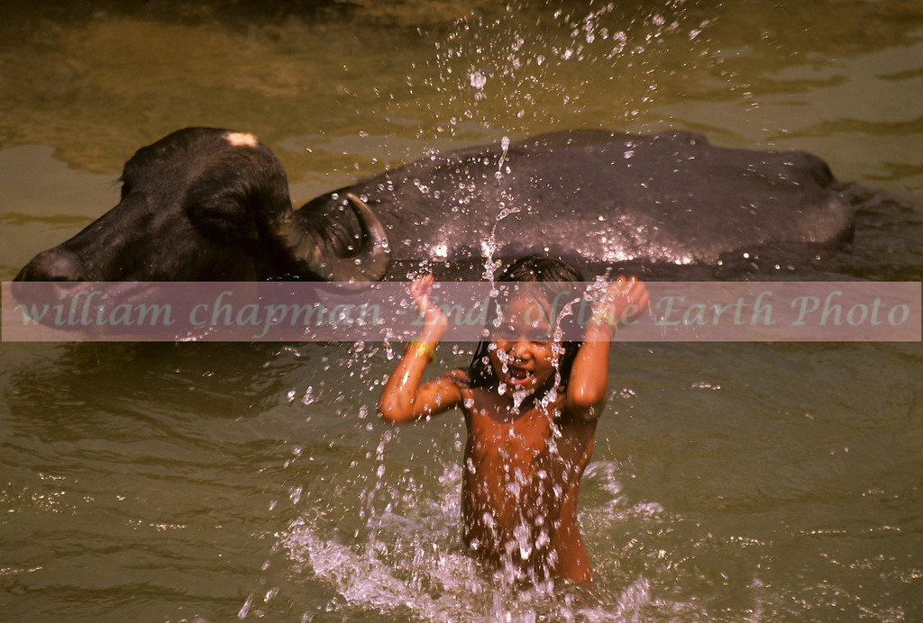 More summer fun with the water buffalo asia