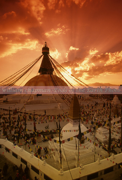Kathmandu- Boudanath Stupa- Buddhist pilgrimage site at sunset asia