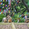 Monkeys and prayer flags at Swayambunath