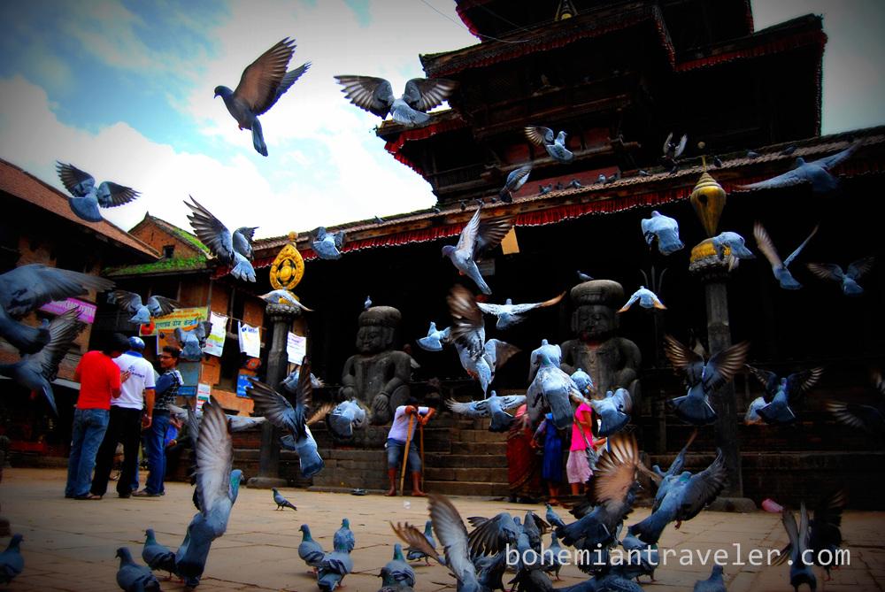 Pigeons of Tachupal Tole.