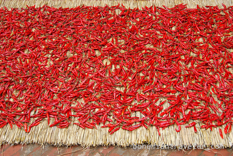 Chili peppers drying.