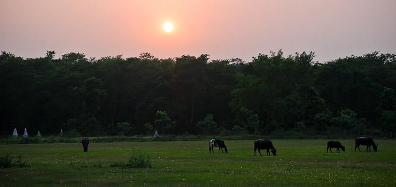 India_April 29, 2008__9