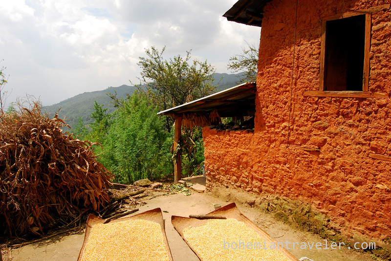 corn drying