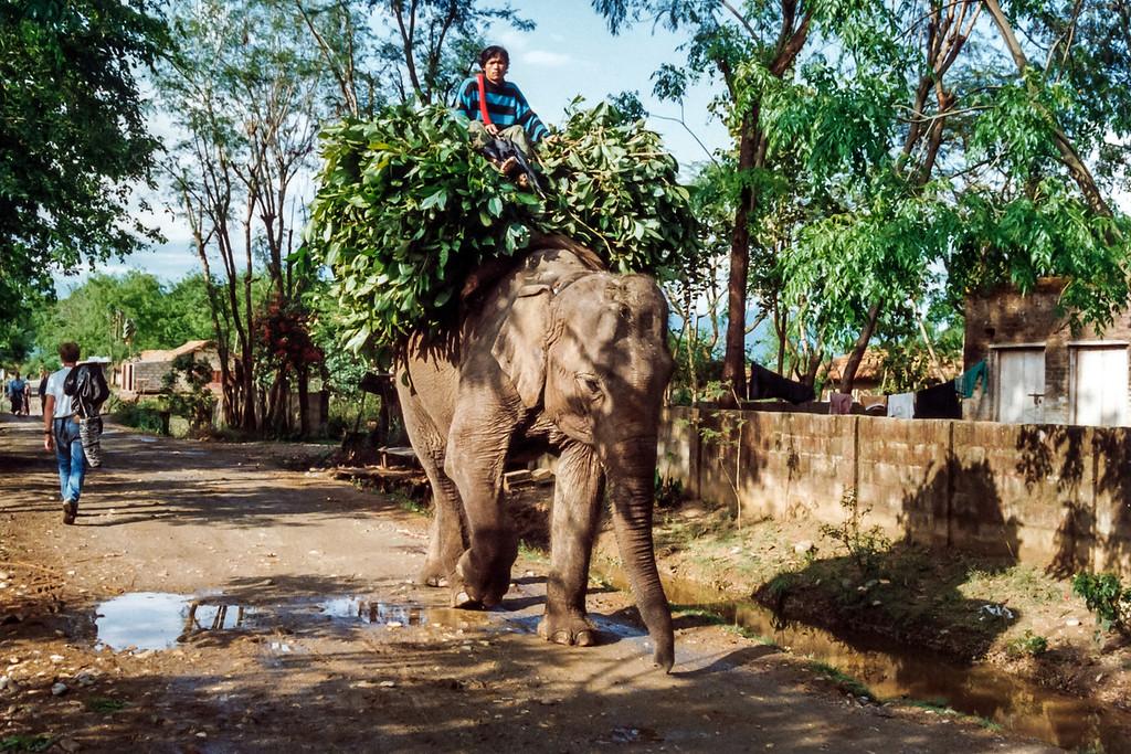 Sauraha Village, Royal Chitwan National Park