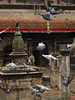 Pigeon run away in a temple at Kirtipur, small village close to Katmandu.
