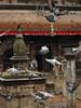 Pigeon run away in a temple at Kirtipur, small village close to Katmandu.