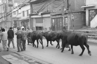 buffalo-street-sh