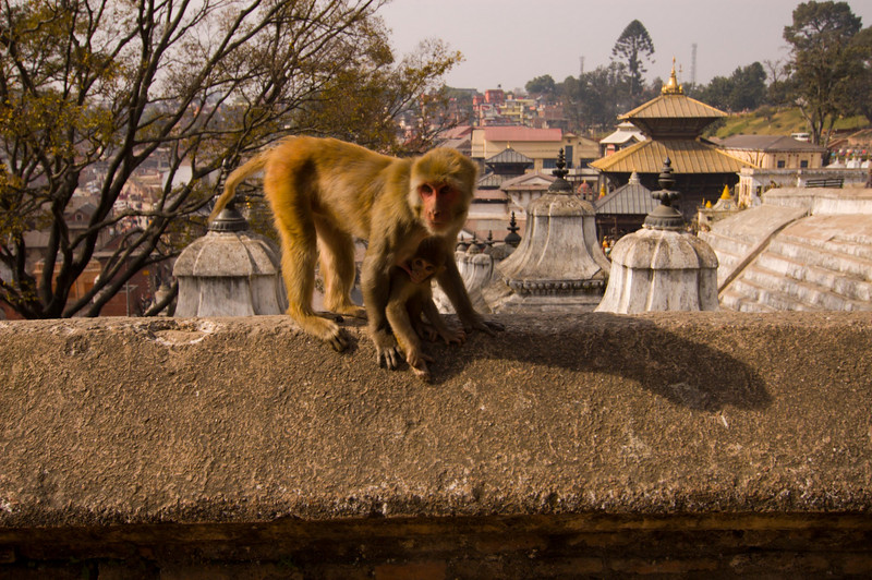 This little guy was having lunch at Pashupatinath, one of Hinduism's holiest temples.