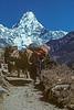 Ama Dablam, Yaks, Himalayan Mountains, Khumbu Region, Nepal, Asia